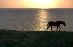 Cavalo e mar Imagem de Stock Royalty Free