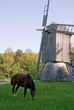 Cavalo e moinho de vento velho Imagem de Stock