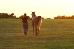 Cavalo e por do sol da menina beta Foto de Stock