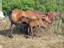 Cavalo e potro fotografia de stock