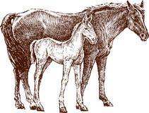 Cavalo e potro ilustração royalty free