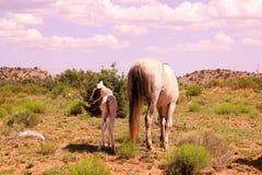 Cavalo e potro fotografia de stock royalty free