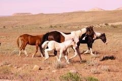 Cavalo e potro foto de stock