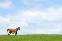 Cavalo e potro Imagem de Stock Royalty Free