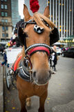 Cavalo e transporte no Central Park em NYC Fotografia de Stock