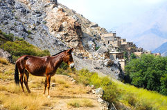 Cavalo e vila em montanhas do atlas, Marrocos fotografia de stock