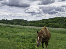 Cavalo em Bredhurst Foto de Stock
