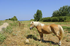 Cavalo em Corfu Foto de Stock Royalty Free