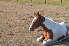 Cavalo em repouso fotografia de stock