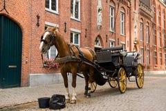 Cavalo em sua ruptura Fotografia de Stock Royalty Free