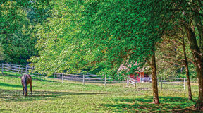 Cavalo em um campo fotos de stock royalty free