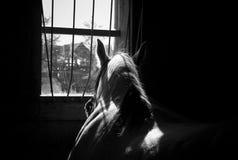 Cavalo em um estábulo Fotografia de Stock
