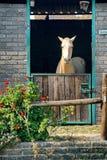 Cavalo em um estábulo em Joanesburgo foto de stock royalty free