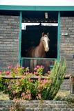 Cavalo em um estábulo em Joanesburgo imagens de stock royalty free