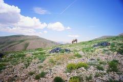 Cavalo em um horizonte Fotografia de Stock