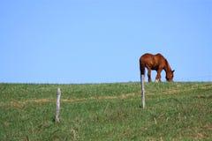 Cavalo em um monte Imagem de Stock Royalty Free