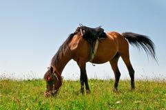 Cavalo em um pasto fotografia de stock royalty free