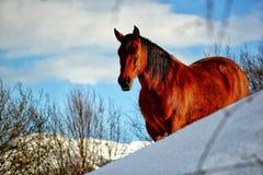 Cavalo em um prado fotos de stock