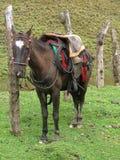 Cavalo em um rancho Fotografia de Stock