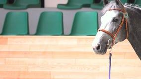 Cavalo em uma mostra vídeos de arquivo