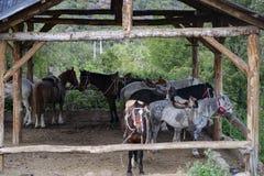 Cavalo em uma tenda fotos de stock