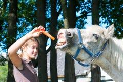 Cavalo engraçado com fome que come a cenoura saboroso! foto de stock