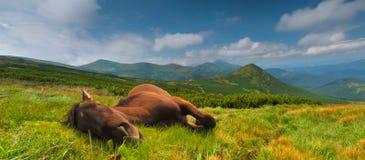 Cavalo engraçado nas montanhas Foto de Stock Royalty Free