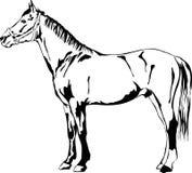 Cavalo ereto Fotografia de Stock Royalty Free