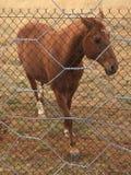 Cavalo ereto isolado fotos de stock royalty free