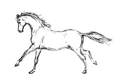 Cavalo esboçado imagens de stock royalty free