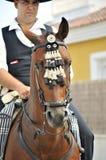 Cavalo espanhol com cavaleiro imagem de stock