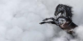 Cavalo espanhol preto que eleva no fumo imagens de stock royalty free