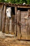 Cavalo estável fotos de stock royalty free
