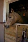 Cavalo, estável Foto de Stock