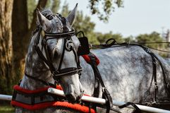 Cavalo extravagante imagens de stock