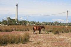 Cavalo feroz e farol fotografia de stock royalty free