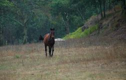 Cavalo grande de Brown em um campo em um dia chovendo fotografia de stock