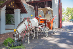 Cavalo grande e gramas verdes Foto de Stock