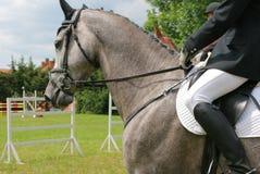 Cavalo Grizzle Imagem de Stock