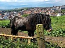 Cavalo longo do cabelo em Whitby, Reino Unido imagem de stock royalty free