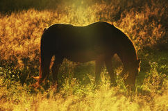 Cavalo mágico Foto de Stock