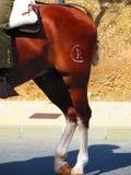 Cavalo marcado fotografia de stock