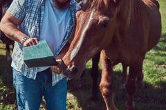 Cavalo marrom bonito no campo Imagem de Stock Royalty Free