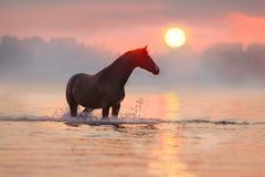 Cavalo na água na luz solar Foto de Stock