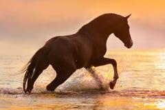 Cavalo na água na luz solar Imagem de Stock Royalty Free