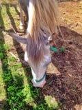 Cavalo na cerca Imagem de Stock Royalty Free