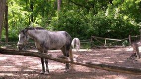 Cavalo na cerca Central Park filme