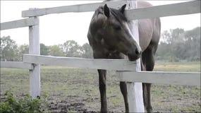 Cavalo, cavalo na cerca video estoque