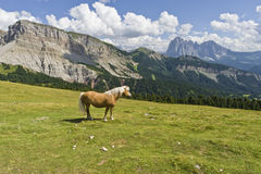 Cavalo na encenação maravilhosa das dolomites, durante o verão Fotografia de Stock Royalty Free