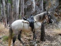 Cavalo na Espanha da Chillar-Nerja-Malaga-Andaluzia do rio Fotos de Stock